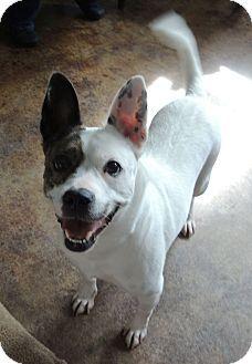 House Springs Mo Terrier Unknown Type Medium Mix Meet Elsa