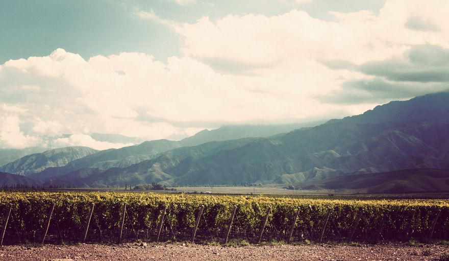 winery - Clos de los Siete