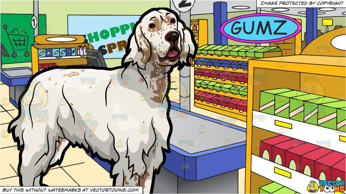 An Adorable English Setter Pet Dog And The Checkout Counter At A