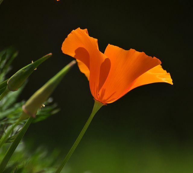 """_DSC0257...""""FLOWERBYKENZO""""... ;-) by ipon1, via Flickr"""