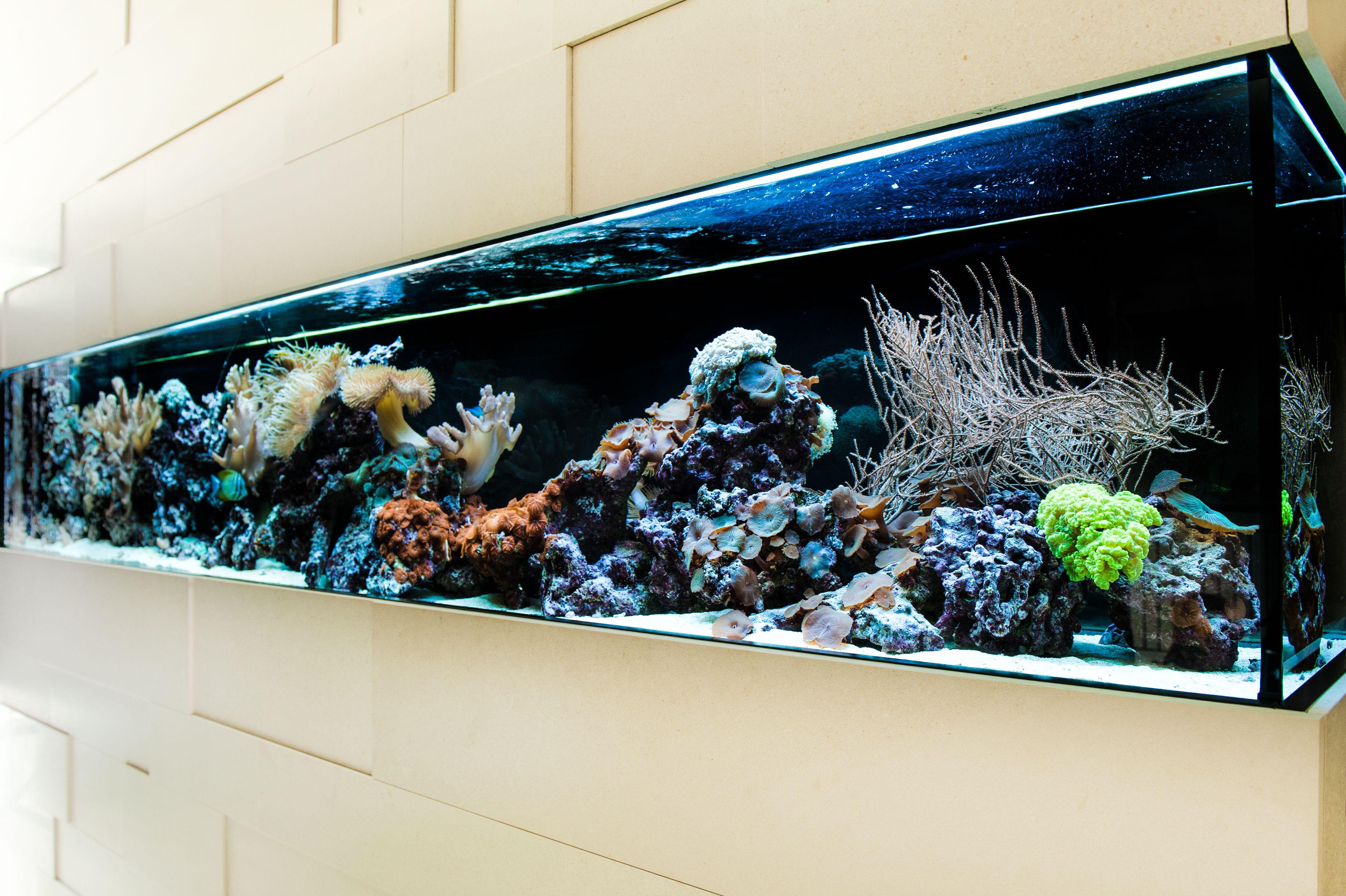 die besten 25 meerwasser aquarium ideen auf pinterest korallenriffe aquarienfische und rochen. Black Bedroom Furniture Sets. Home Design Ideas