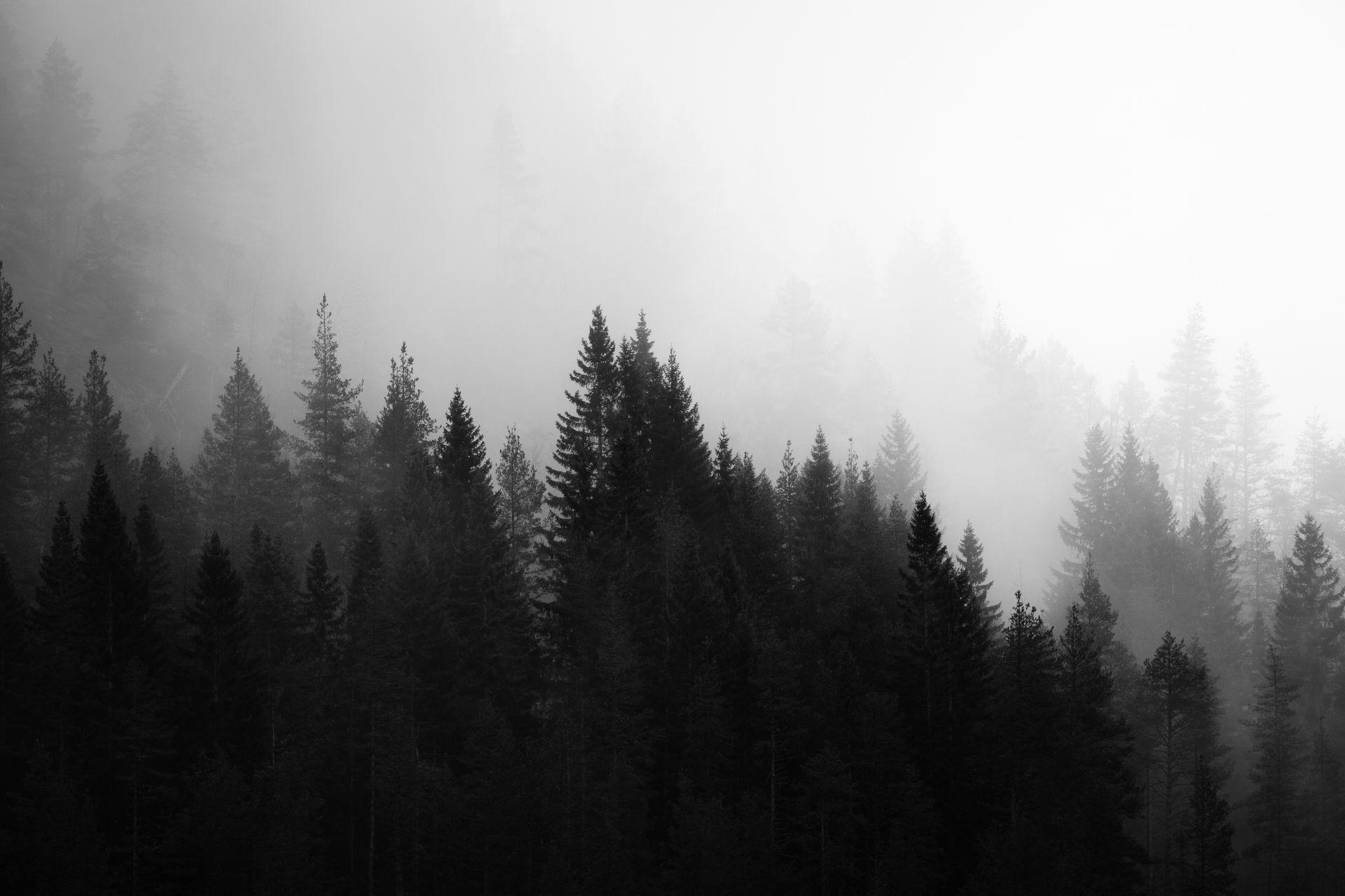 Black White Lightroom Presets For Desktop Mobile Dng Black And White Landscape Nature Photography Landscape Photography