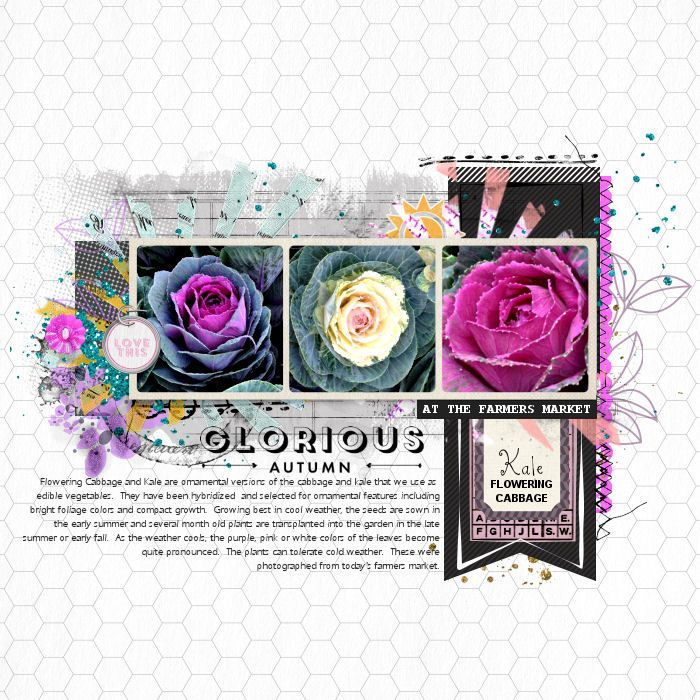 Flowering Cabbage - Digital Scrapbooking Ideas - DesignerDigitals #floweringcabbage #kale #vegetables #farmsersmarket
