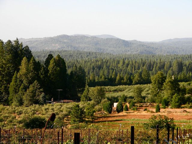 Christmas Tree Farms And Beautiful Views Of Apple Hill Calif California Hills South Lake Tahoe Placerville