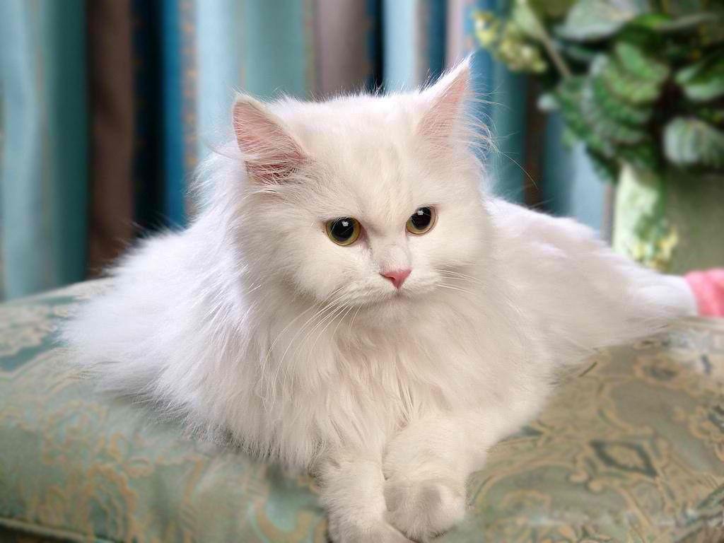 62 Super Cute Cats Enjoy Micice Pinterest