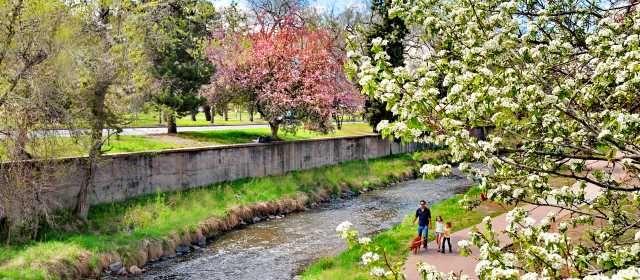 Cherry Blossoms Along Cherry Creek Visit Denver Travel Around The World Denver City