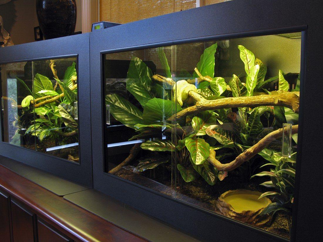 #Arboreal #Snake #Enclosure #Reptile #Terrarium #Decorations #Decor #DIY - 25 Best Arboreal Vivarium Images On Pinterest Reptile Cage