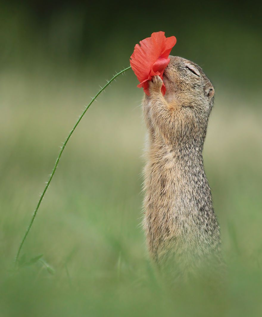 21 photographies hilarantes d'animaux de la forêt dans des postures très drôles