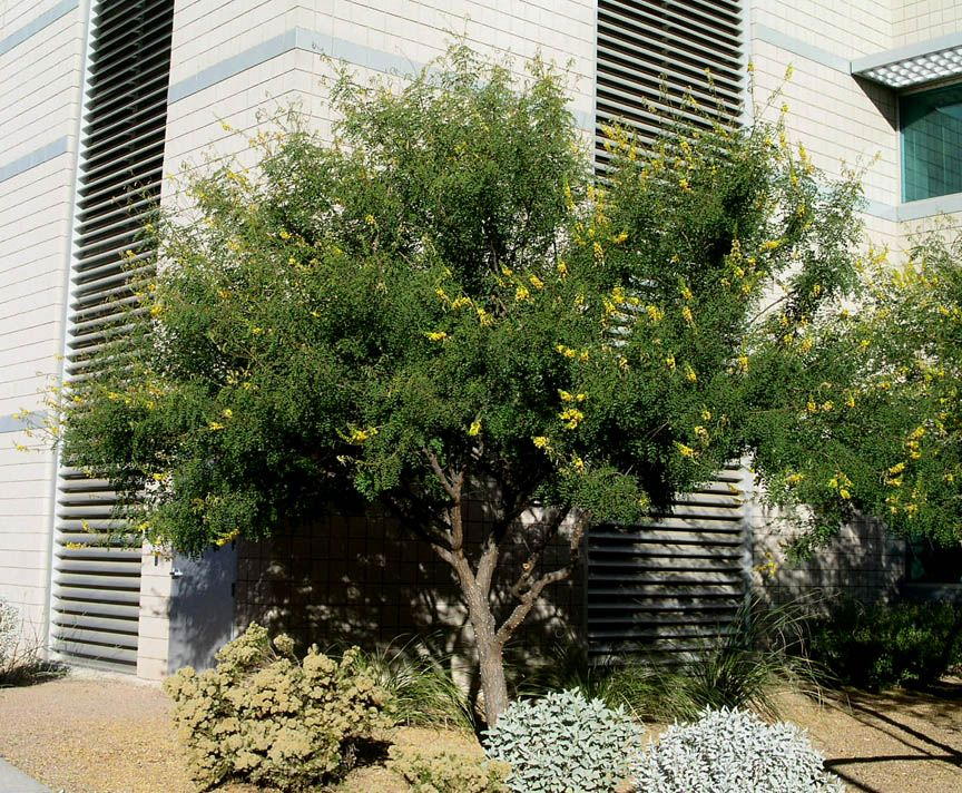 Plants Hardy Outdoor Winter Succulent