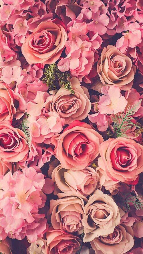 Imagen de flowers, rose, and pink