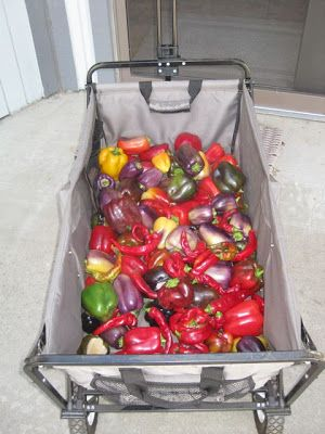 The Farmer Fred® Rant: Too Many Peppers? Try This Relish Recipe