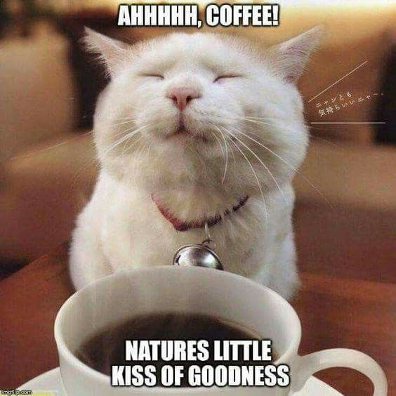 ahhh, coffee! cat good morning good morning quotes coffee ...
