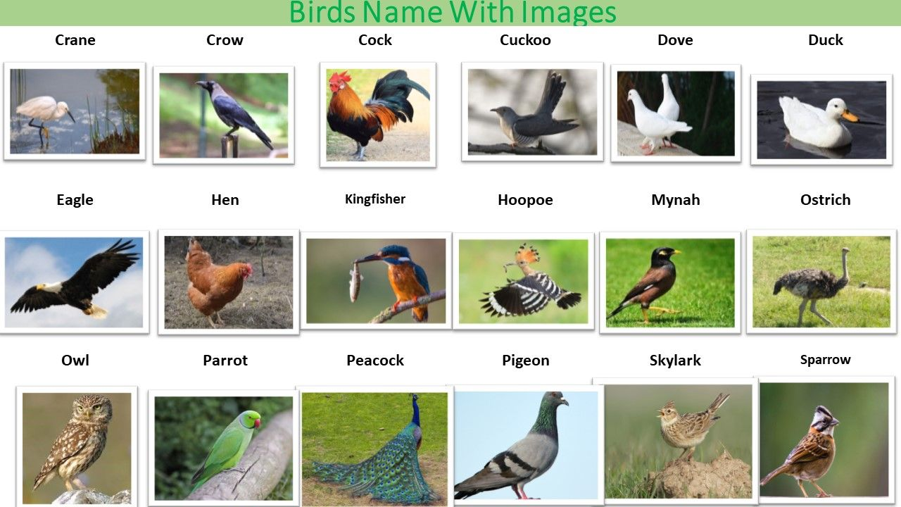 Image Result For Birds With Names Animals Name In English Names Of Birds Animals Name With Picture
