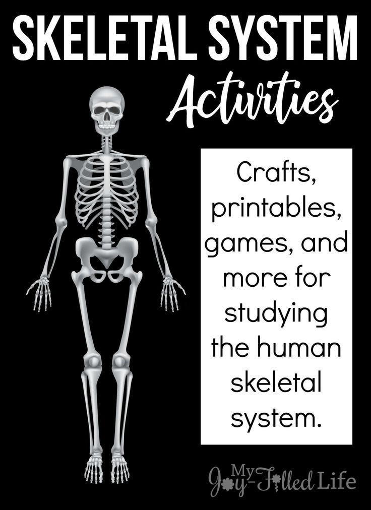 Activities For Learning About The Skeletal System Activities
