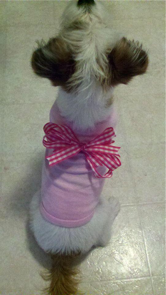 Good Ribbon Bow Adorable Dog - 717bb22512de0e04f99ec57e27cc6c6e  Graphic_216745  .jpg