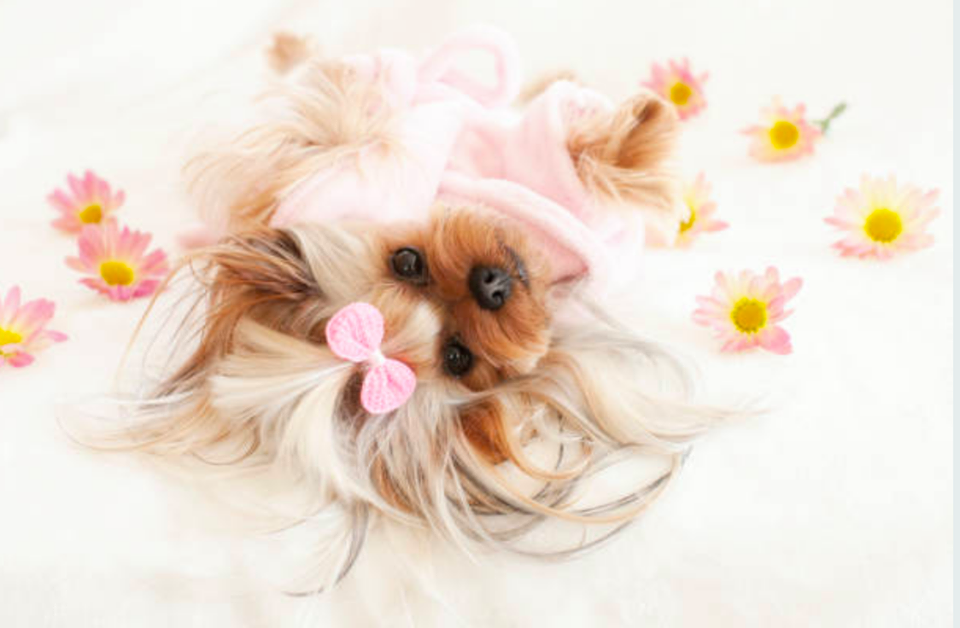 We provide a wide array of pet grooming services. Our