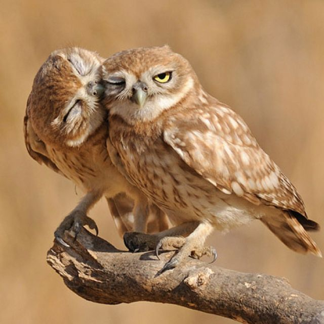 Hooo is that cute couple?