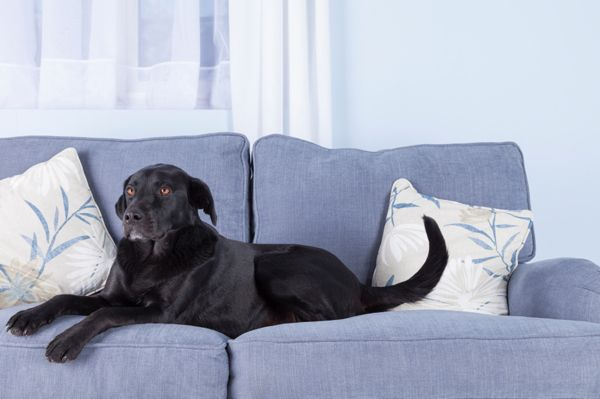 Nice furniture and pets do mix pets and animals dog - Pet friendly living room furniture ...