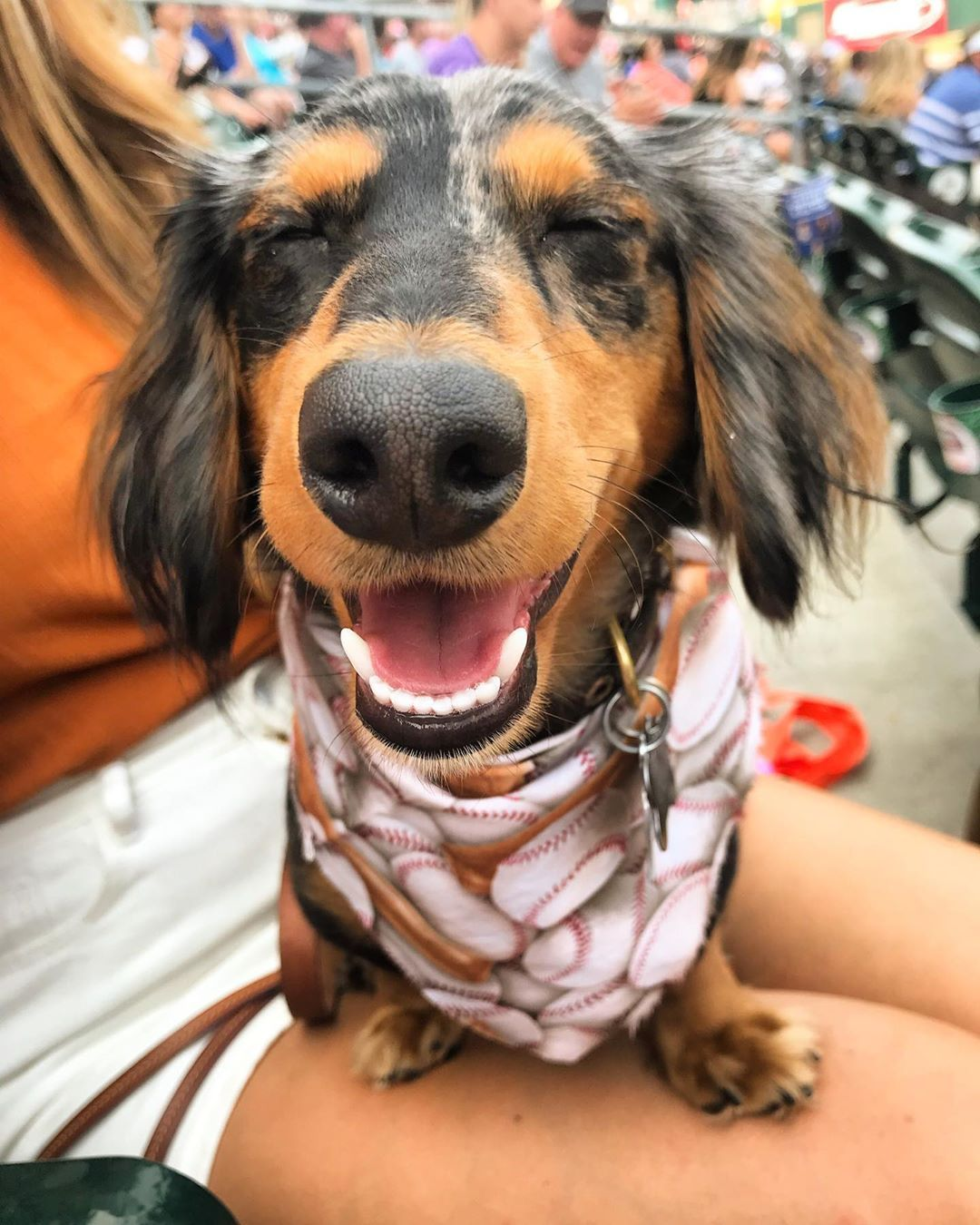 Dachshund Products Apparel And Gifts Dachshunds Riding Low