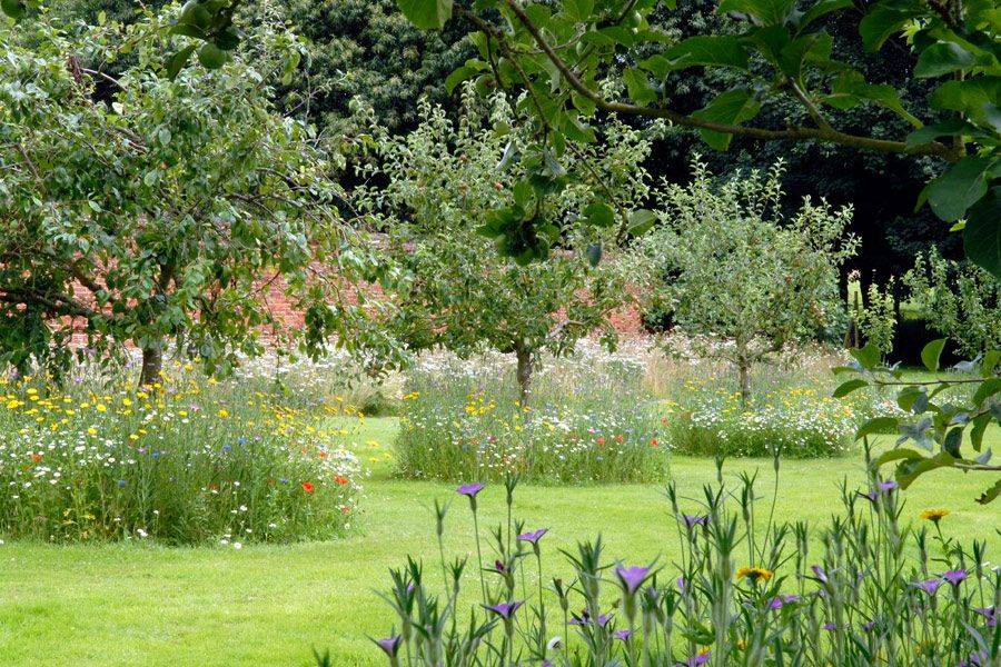The Existing Orchard Was Topped Up With Norfolk Heritage Apple And Pear  Varieties. We Sowed Wild Flowers Around The Trees, Partly To Look Be.