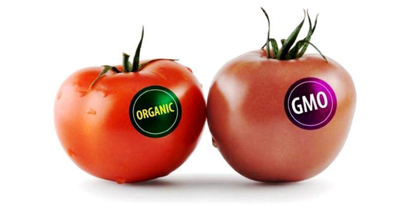 Orgánicos vs transgénicos
