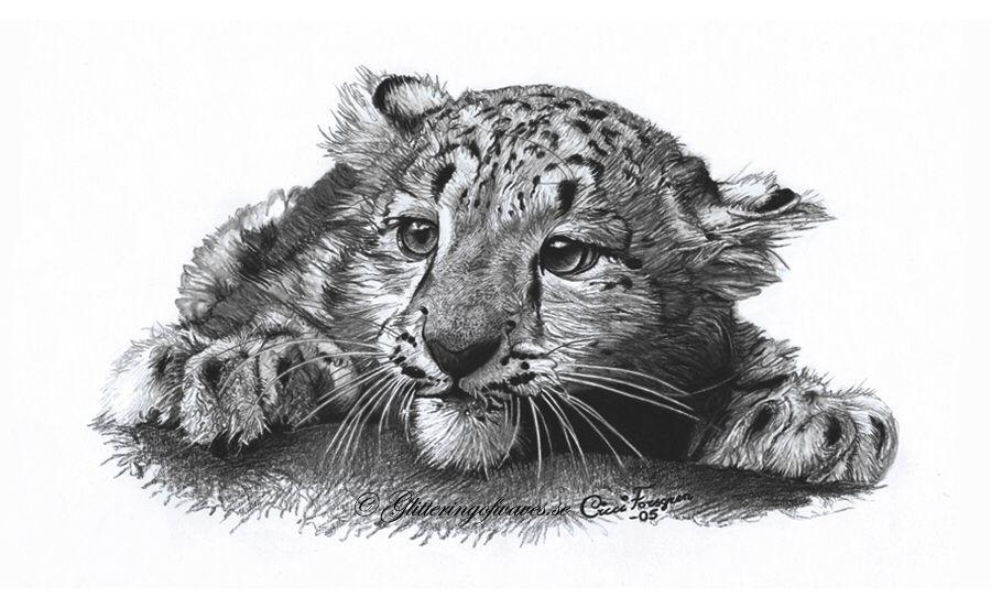 Drawing Of Baby Snow Leopard Leopard Junges Tierzeichnung