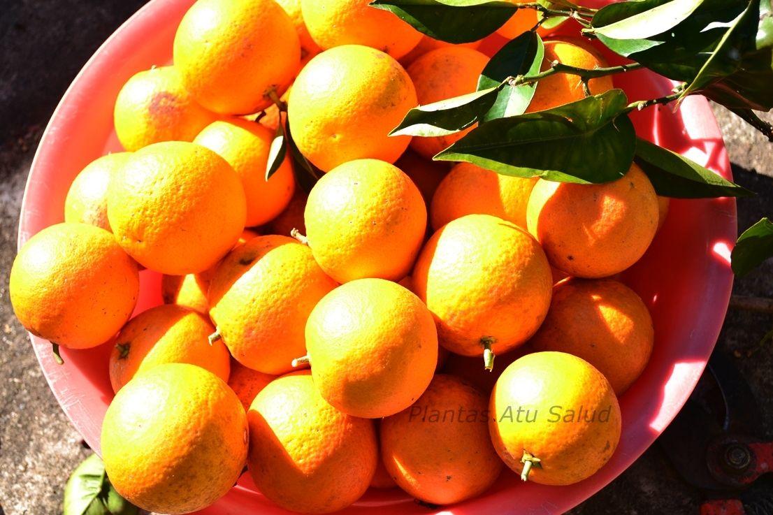 De con especias naranja licor