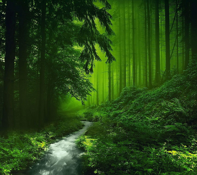 Hd Green Forest Wallpaper Hd Wallpapers Pulse Bosque