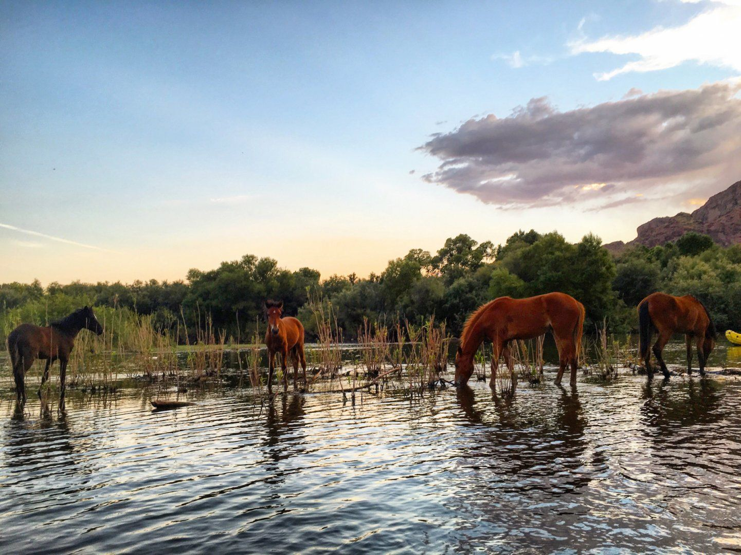 Wild Horses Seen During A Kayaking Trip Lower Salt River Water Users Camp Circle To Granite Reef Adventure Kayak Trip Trip