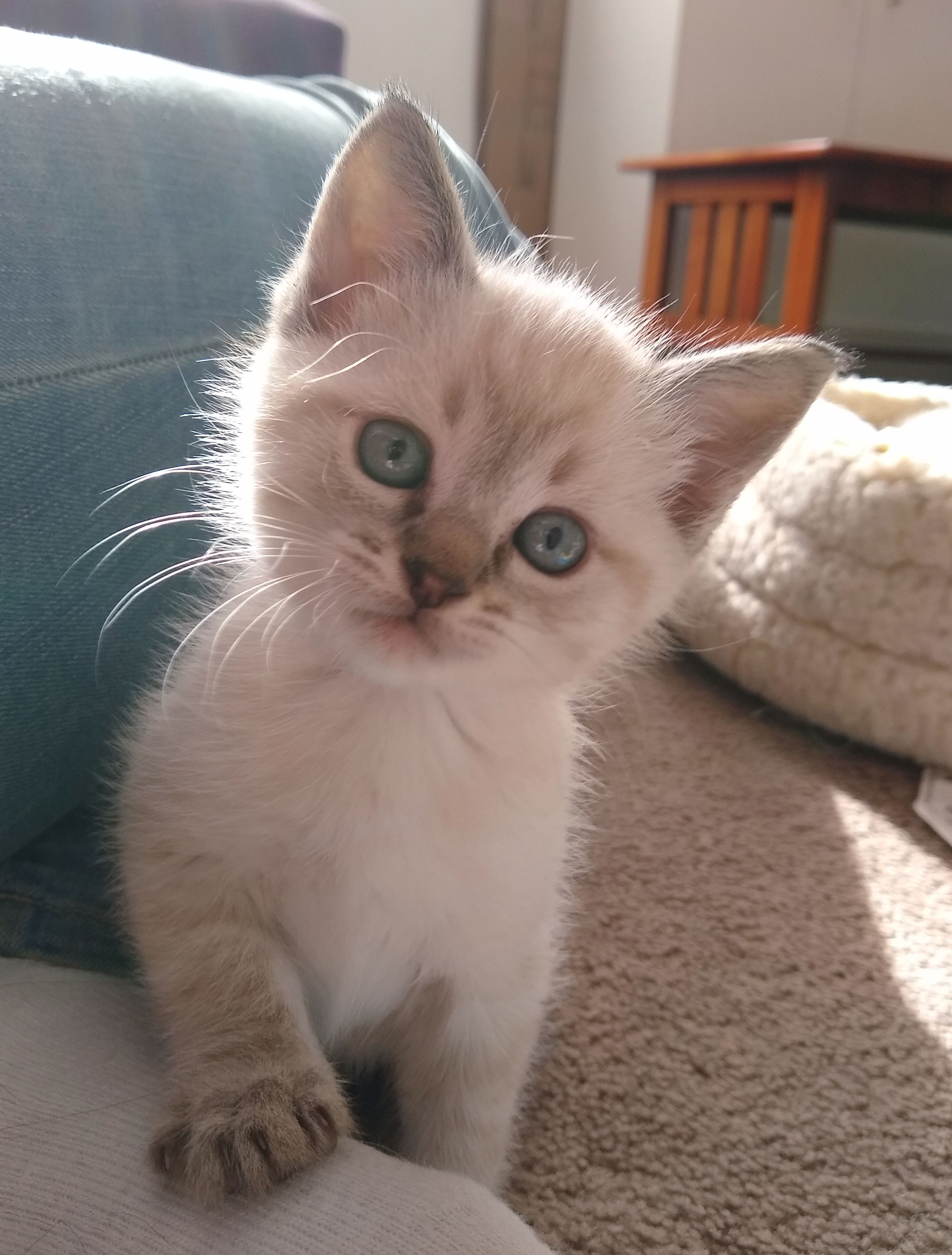 My Foster Kitten Marshmallow At About Five Weeks Old Kittens