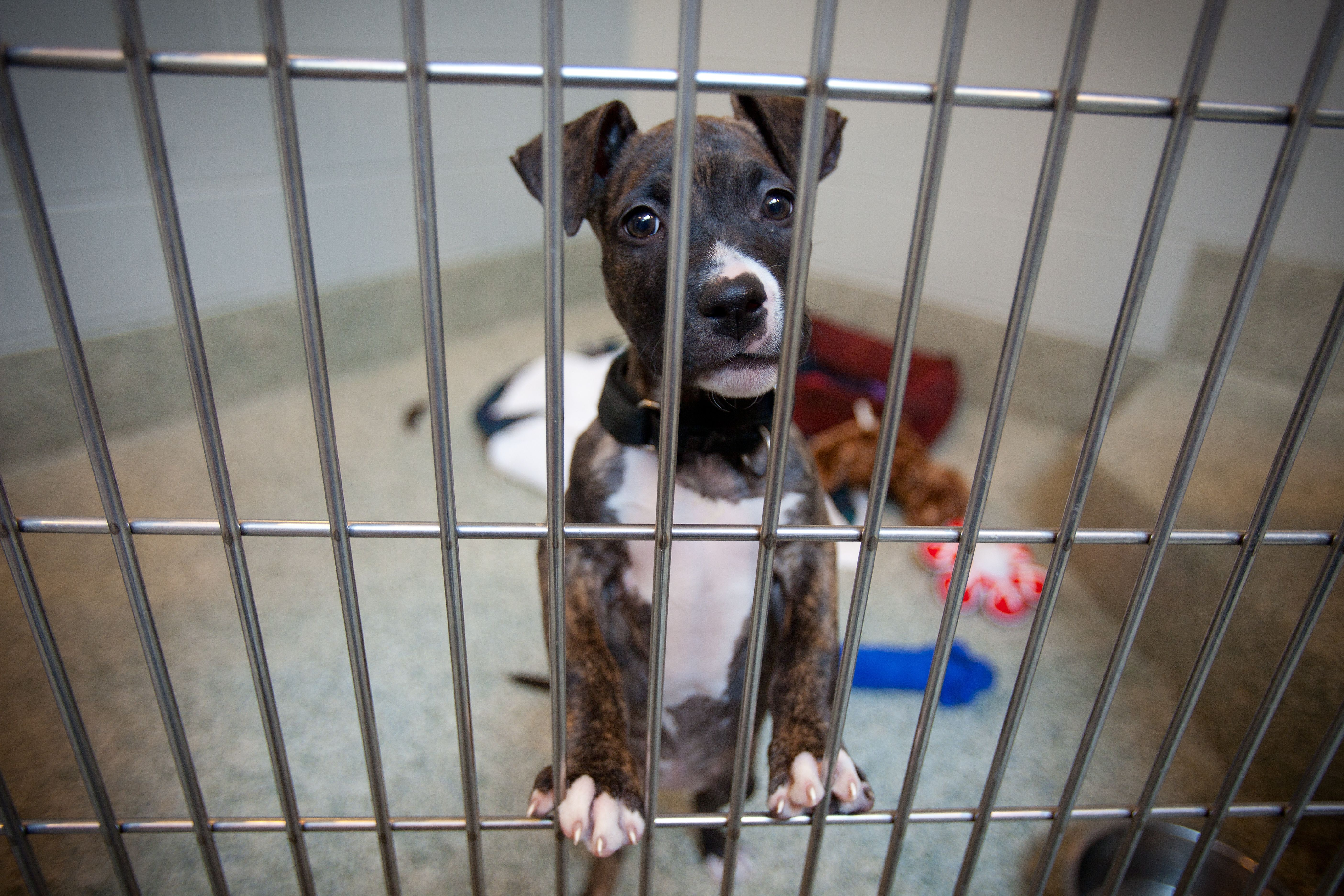 This New Site Will Help You Find The Perfect Dog Child Friendly Dogs Shelter Dogs The Perfect Dog