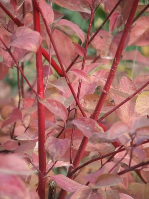 Fall And Winter Color In California Native Plant Garden