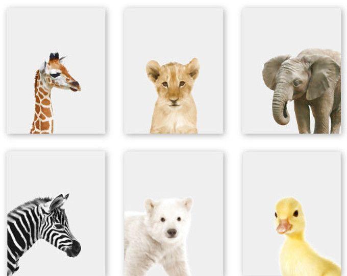 Baby Animal Prints Nursery Art Zoo Animals Jungle Decor Safari
