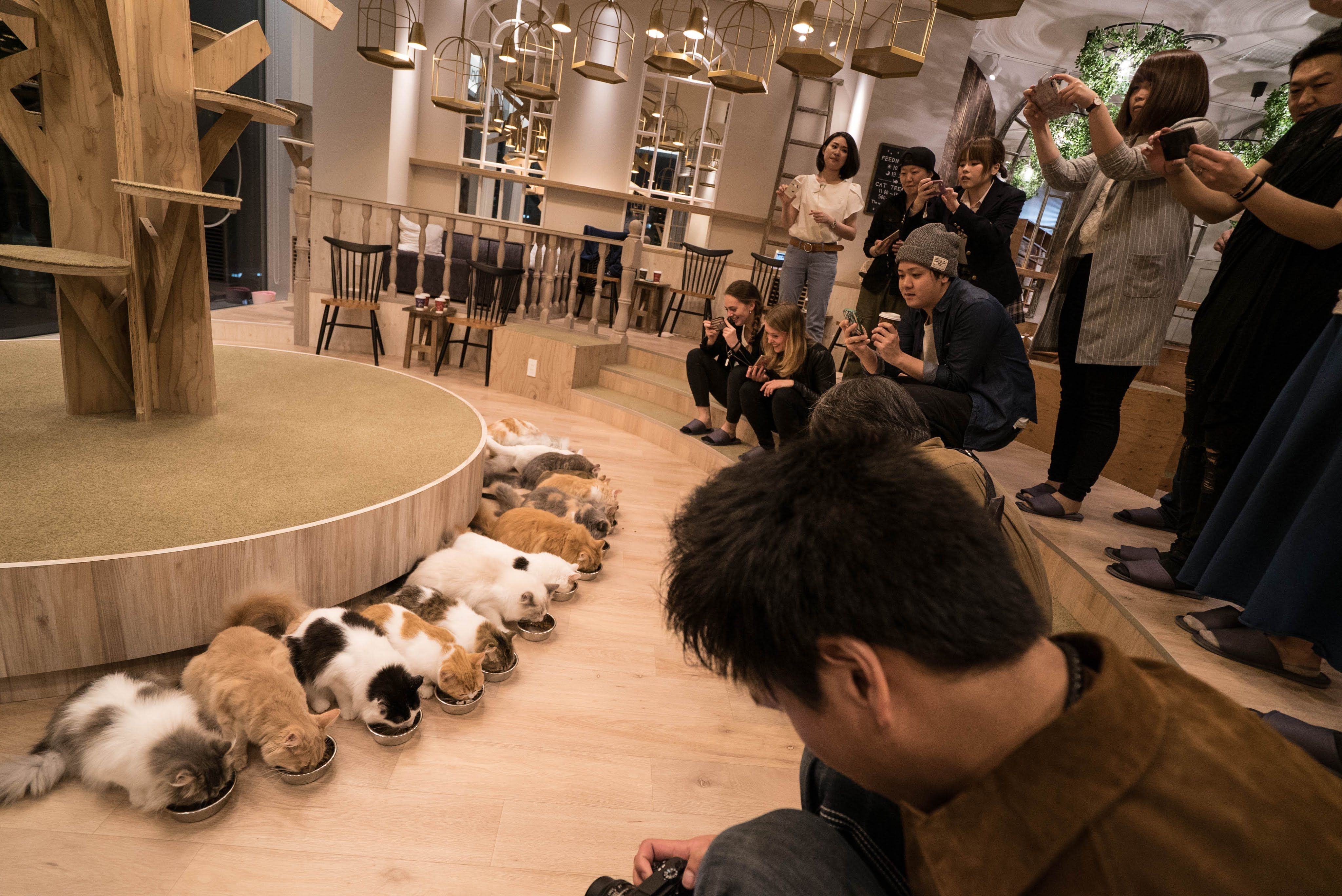 Cat Cafe In Japan Cat Cafe Pretty Cats Love Pet