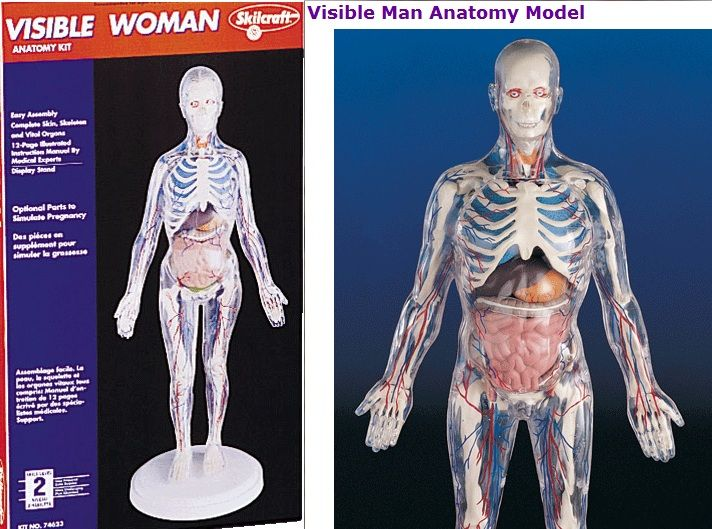 Try Invisible man/woman models for biology/anatomy concepts ...
