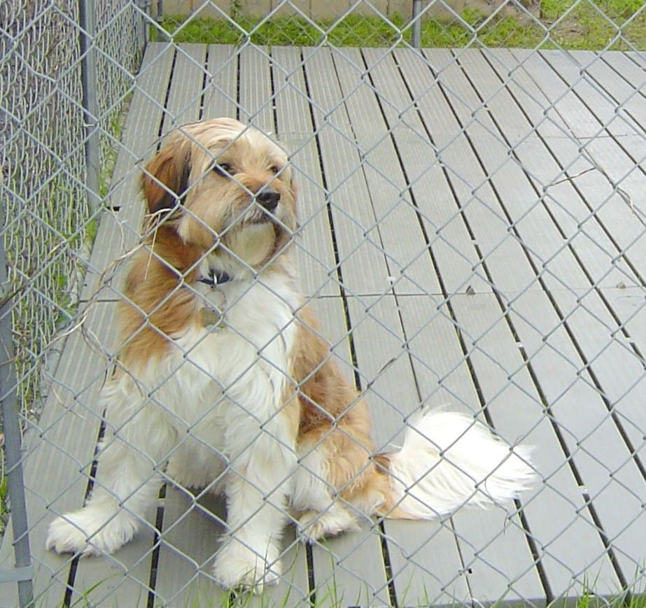GoPet Kennel Deck is the perfect solution to providing a