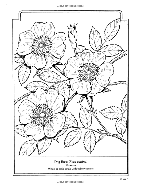 The Language Of Flowers Coloring Book Dover Nature John Green 9780486430355 Amazon Books