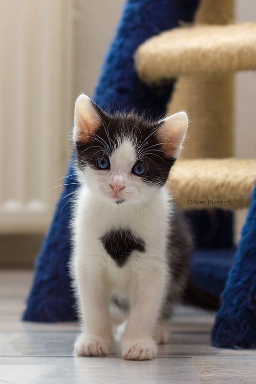 Just a cute little kitten