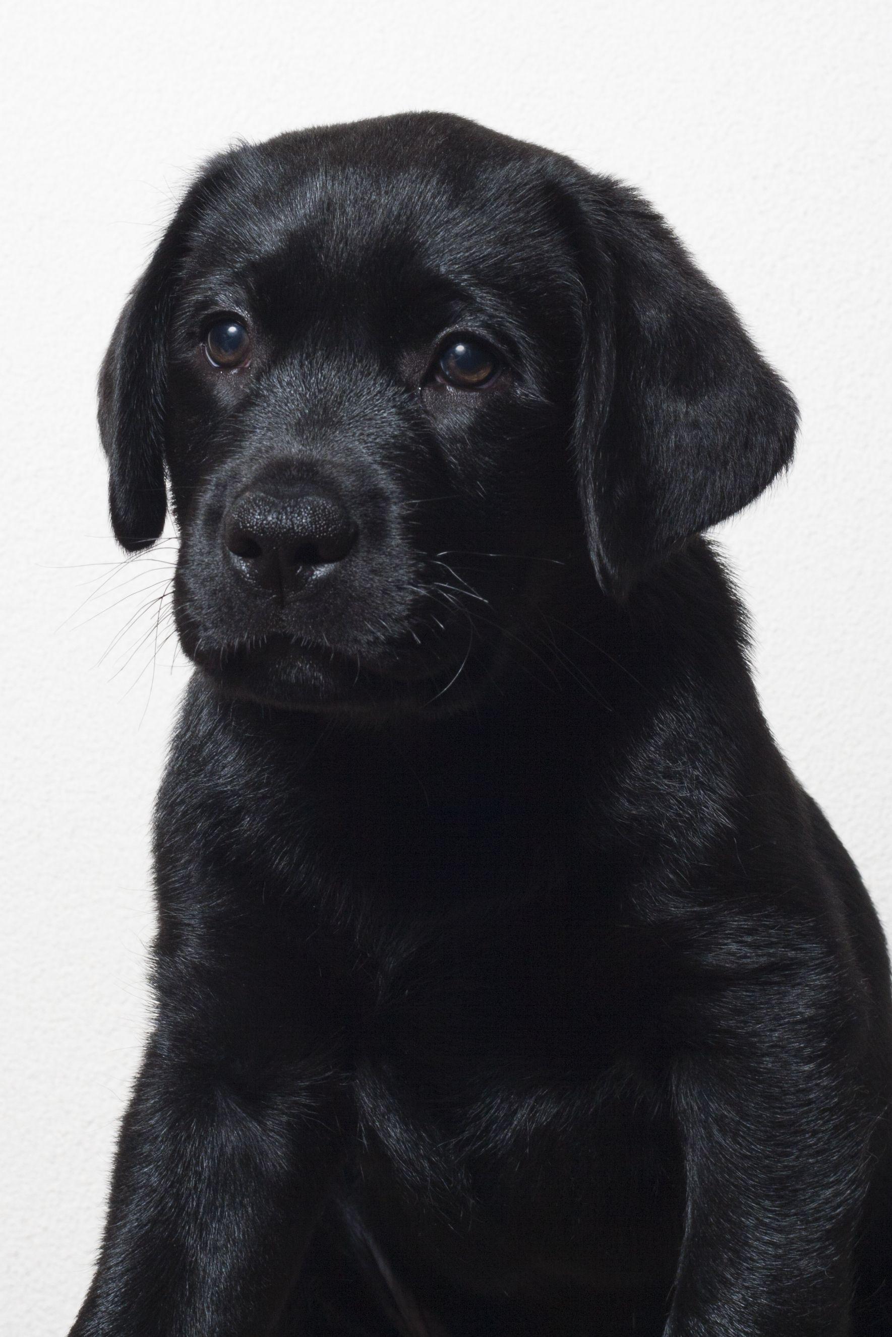 Onze Joop Honden Hondjes Schattige Dieren