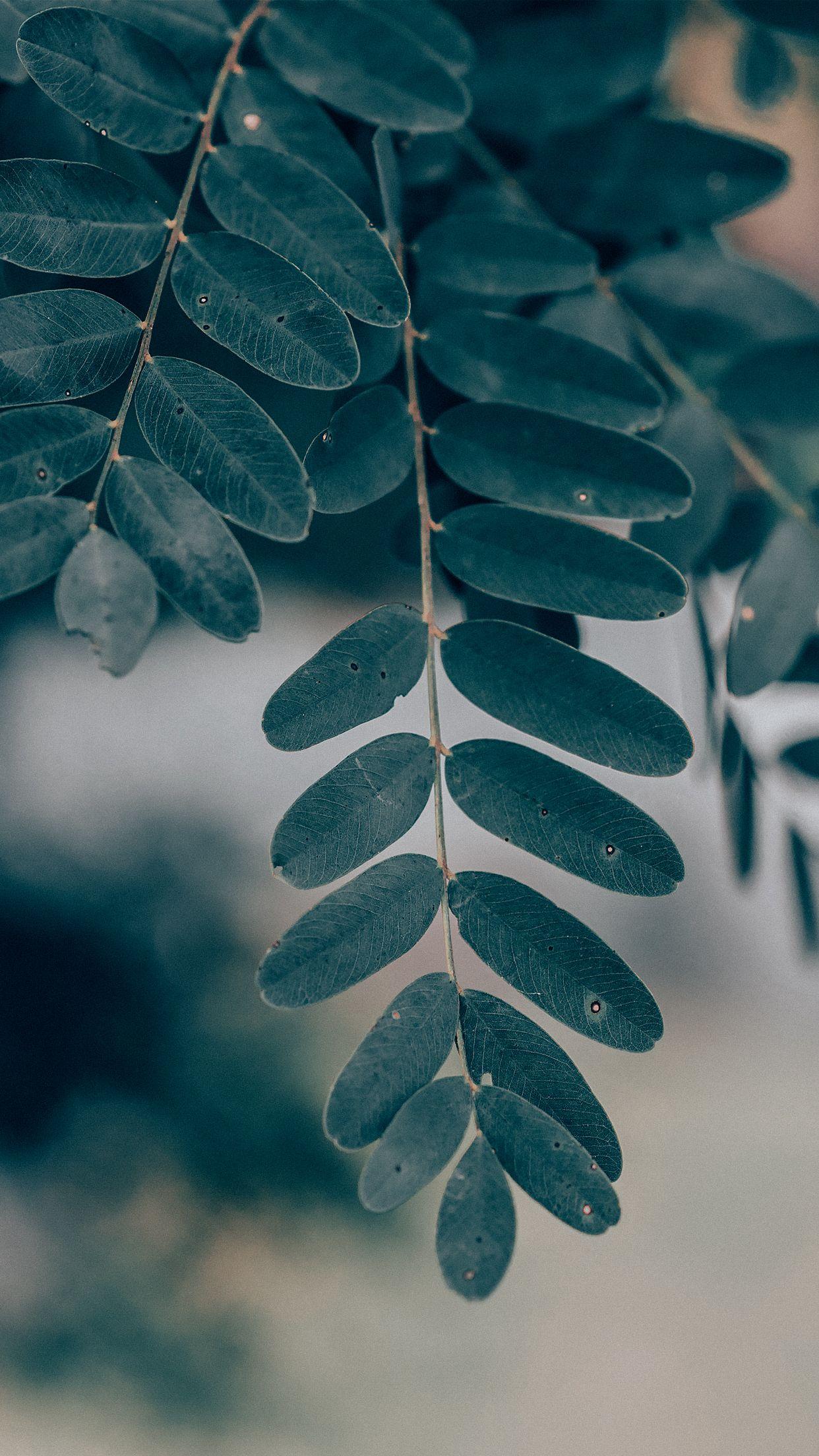 Fundo de tela folhas