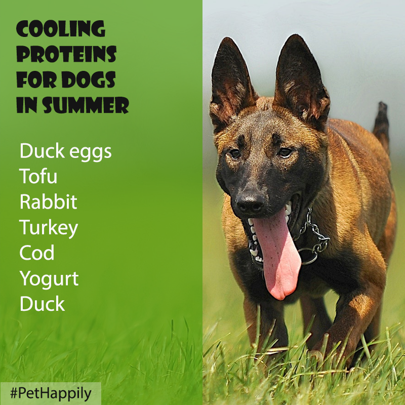 Proteins Are Essential To Your Dog S Diet Some Cooling Proteins