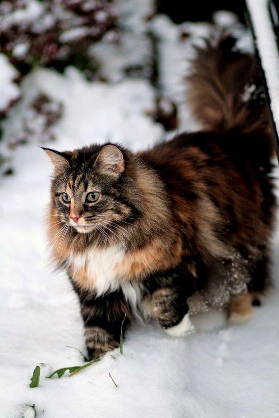Boskat in de sneeuw