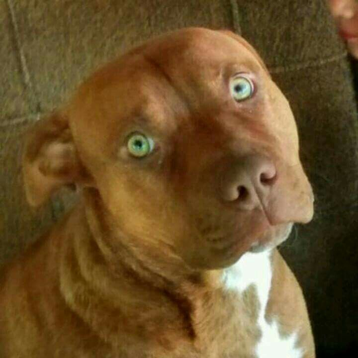 Green Eyes Animals Dogs And Puppies