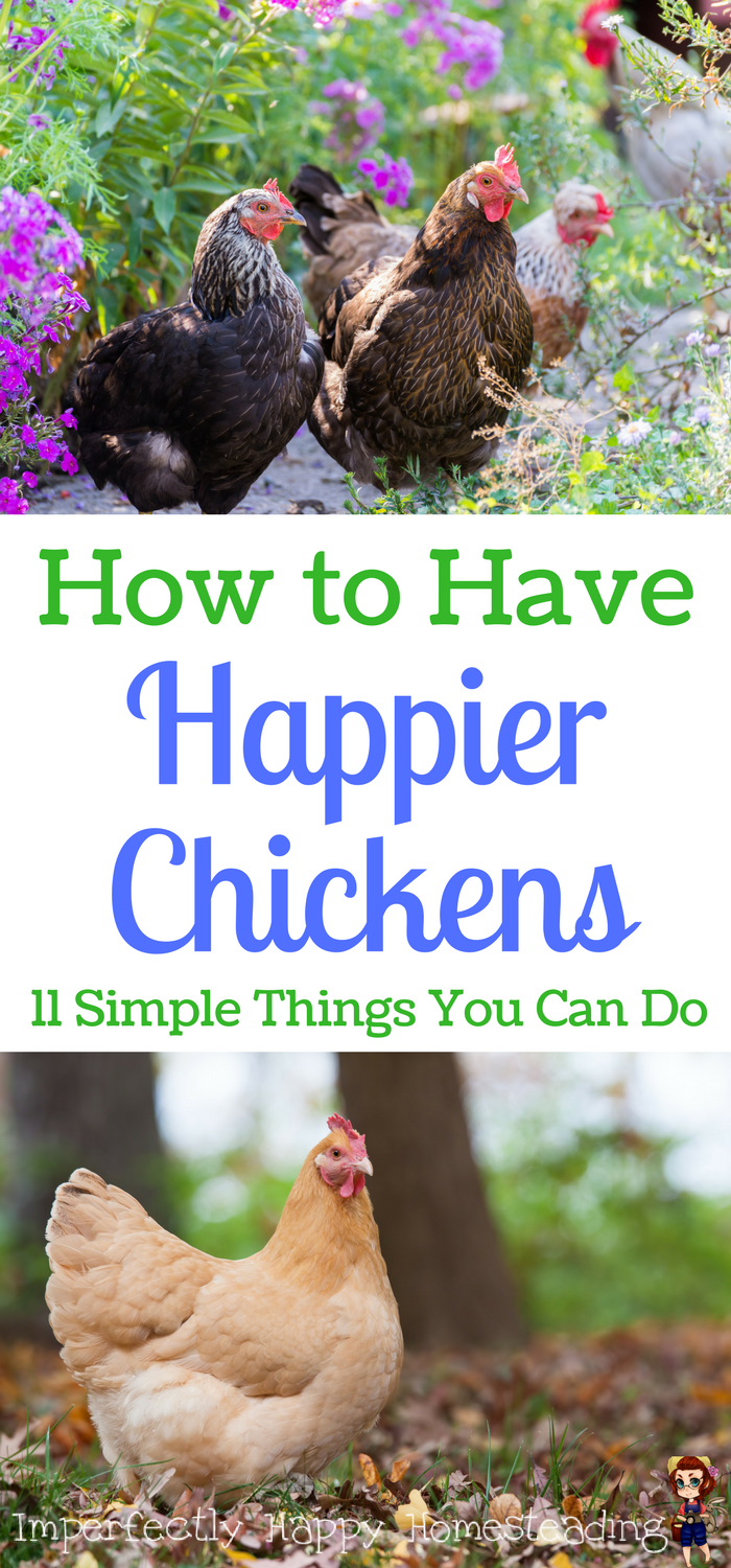 How to Have Happier Chickens - 11 Tips to Make it Easy ...