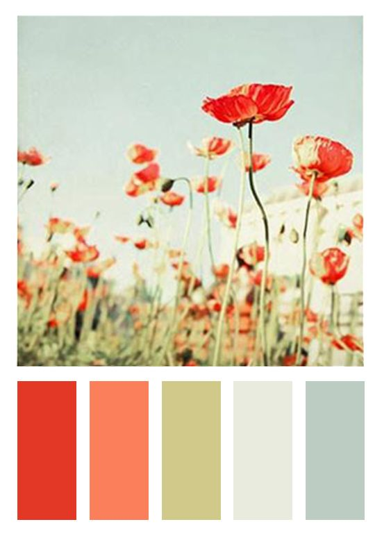 Hysterical, this came from a wayfair poppy photograph duvet lol: red-orange   coral   sage green  gray   dusty/pale cornflower blue