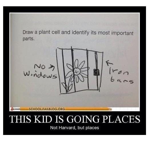 """Draw a plant cell,""  she said...hahaha"