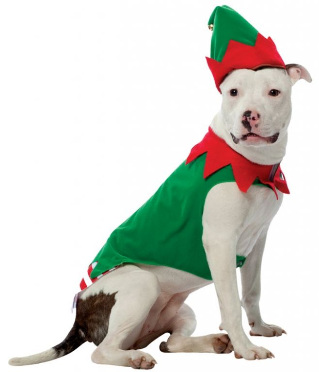 Rasta Imposta Elf Dog Costume, XXX-Large Includes a hat and one body piece  Recommended for dogs over 49 lbs. This costume was designed by Rasta Imposta - Elf Pet Costume Christmas Clothing Pinterest Elf Pets, Pet