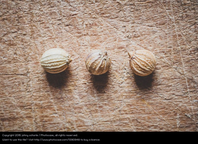 Foto 'Die drei vom Koriander' von 'johny schorle' #food #foodphotography #photography #stock  #paleo #vegan #vegetarian #macrophotography #spices #seasonings #coriander