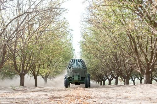 Feature: Kern County's nuts
