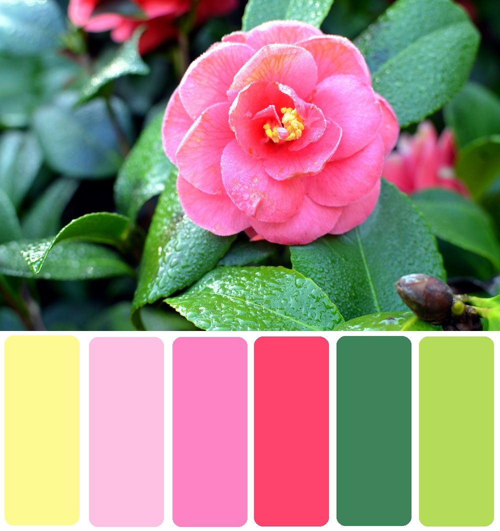 pale pink, bright pink, dark green, pale green, pastel color scheme ...